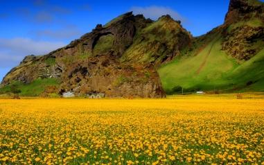 6954948-yellow-flower-field