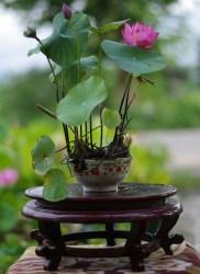 pfocchinese_bowl_lotus_ugkr[1]