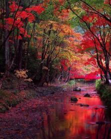 perfection-in-the-shizuoka-prefecture-japan