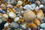 _shells